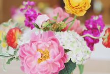 Petals and Blooms / Flowers