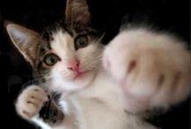 Gatos / Como se relacionan los gatos