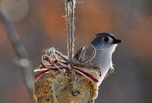 Birds / Birds / by Annette Gilbert
