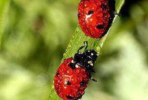 Beautiful Bugs / by Misty Cole