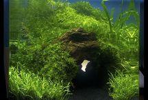 aquariumpje