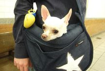 Luxury Pet Carriers / Pampered Paw Gifts.com has the best in luxury carriers for dogs and cats!  Don't see it? Ask us.