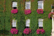 Pink & Green / by Nanette Winkler