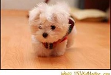 Puppy Love :) / by Bobbie Waldvogel