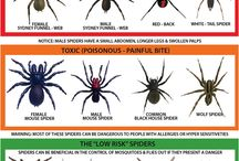 Insekter och Djur