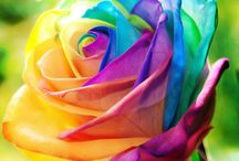Färgsprakande bilder