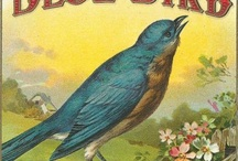 B 4 Bird