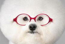 Animal Eyecare