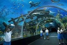 Singapore Tours Deals 4 U / We brings best Travel deals for Singapore. We have Singapore best Day Tours & Attractions, short stay in Singapore. Our Professional can provide the best advice to visitors.