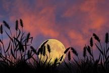 Lunar tic / by Michele Sarra Scott