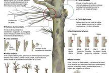 plantas (poda plagas)