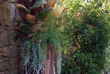container gardening / by Carmen Pemberton