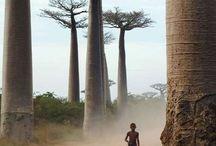 Africa mozembique