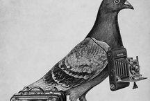 Pigeon's POWA