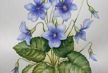 kwiaty ziola