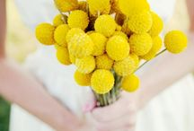 Kvetinová inšpirácia - craspédia
