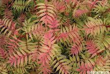 Reds & Orange / Plants for your garden