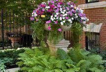 Flowers/Gardens/TIPS / by Denise McCowan