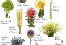verdeata / flori