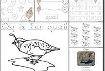 MFW:  Qq - Quail
