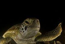 Scuba Diving Pics October 2014 / by PADI