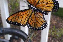 Butterfly's in plastic bottles
