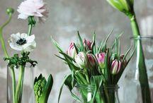 Des fleurs, des plantes, des jardins, des terrasses...