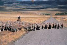 paisajes patagonicos