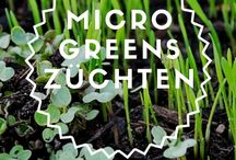 Microgreens, Sprossen und Co