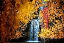 Fall / by Elaine Bundy