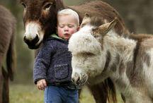 someday donkey <3 / by Jenny Lee