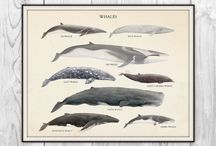 Animals.Whale
