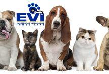 Peluditos -  EVI / Únete a nuestra familia EVI. http://www.evi.com.co