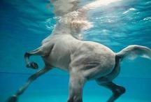 Horses / by Annet Becker