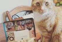 #grazepets | Graze / Adorable grazers with paws!