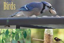 Birds in the yard