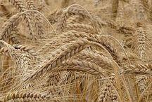 ae: [thg] District 9 / Grain