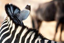 Beloved South Africa / by Nicky Voorwerk