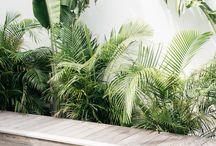 Plante piscine