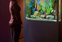 aquário discos