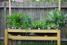 Trädgård / Odling och estetik