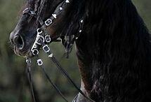 Djur / Fina bilder på djur