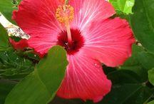 Flores Plantas & Frutos / Cocktails de cores e sabores