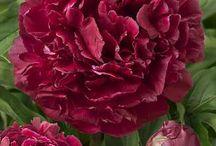 Floral wonders