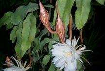 Flor raras