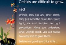 Orchid World / Orchid plants and flowers