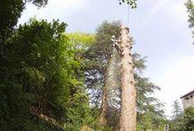 Abattage d'arbre / Abattage d'arbre en Ardèche.