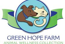 """Animals and Flower Essences / Flower essences can help to support animals who are experiencing anxiety, grief, and fear, or those who have health issues or are recovering from trauma or surgery.   In my work as an animal communicator, I often recommend flower essences from the Green Hope Farm Animal Wellness Collection or from Spirit Essences as a form of """"aftercare"""" after a telepathic consultation.  In February, all of my Animal Translations clients receive a complimentary flower essence with each session, as my gift."""