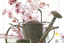 Spring Decorating / Bringing spring inside.