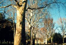 """Parco della Montagnola / Il Parco della Montagnola è stato il primo vero giardino pubblico di Bologna ed è l'unico di una certa dimensione all'interno del centro storico. La sua posizione tra la stazione ferroviaria e l'autostazione delle corriere ne fa, da una parte, un luogo nevralgico della città – di fatto ne è quasi la """"porta"""" di accesso per chi viene da fuori – dall'altra un punto di aggregazione."""
